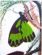 Green Birdwing